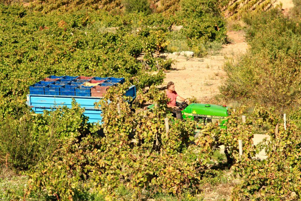 Montsant vins blanc espagnols