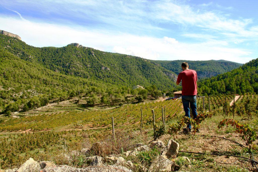 Bancal del bosc Montsant vins espagnols Luxembourg vi(e)