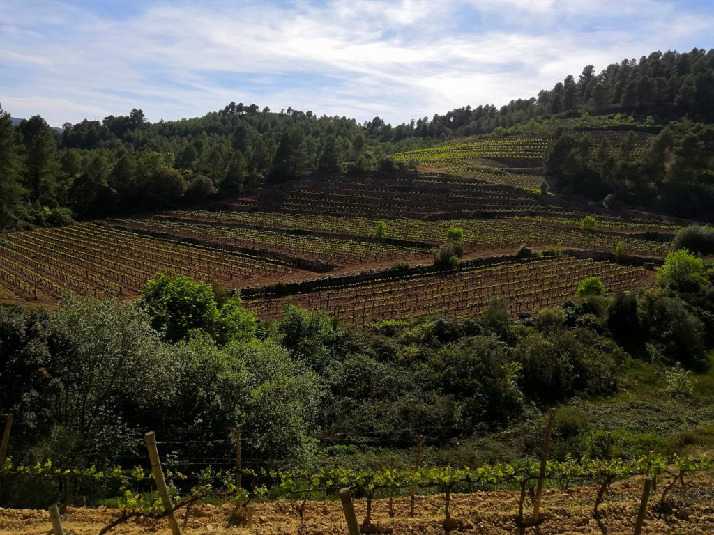 solpost blanc Montsant vins espagnols