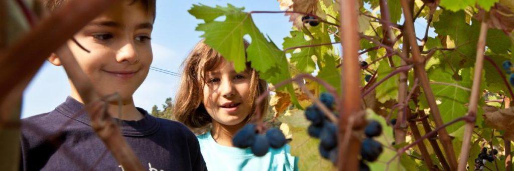 joana montsant vins espagnols fruités Luxembourg