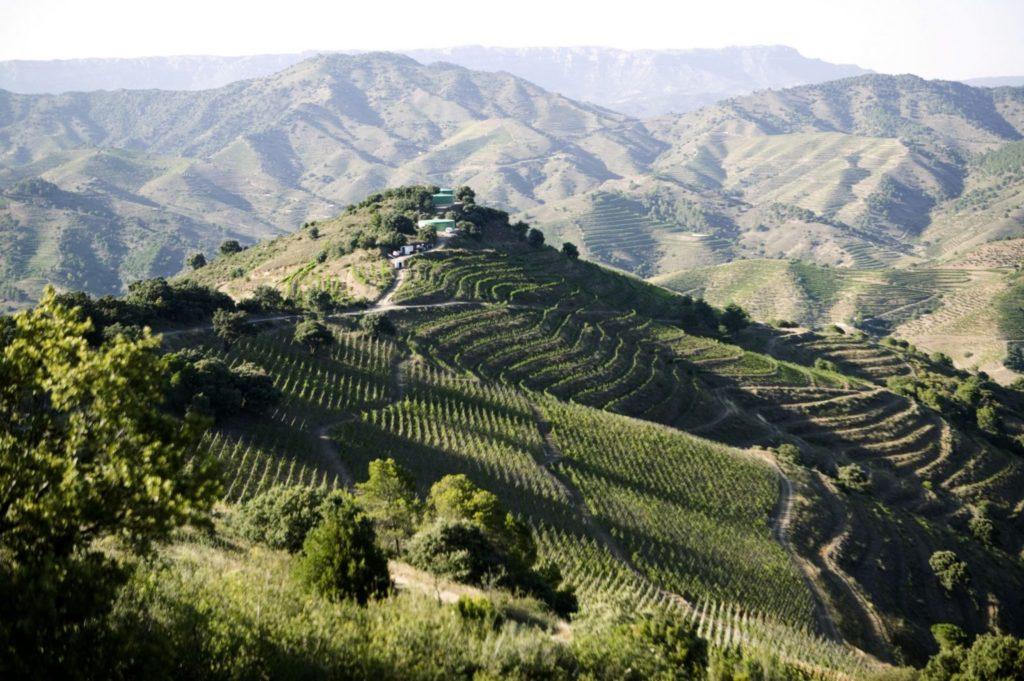 Priorat vins espagnols Luxembourg vi(e)