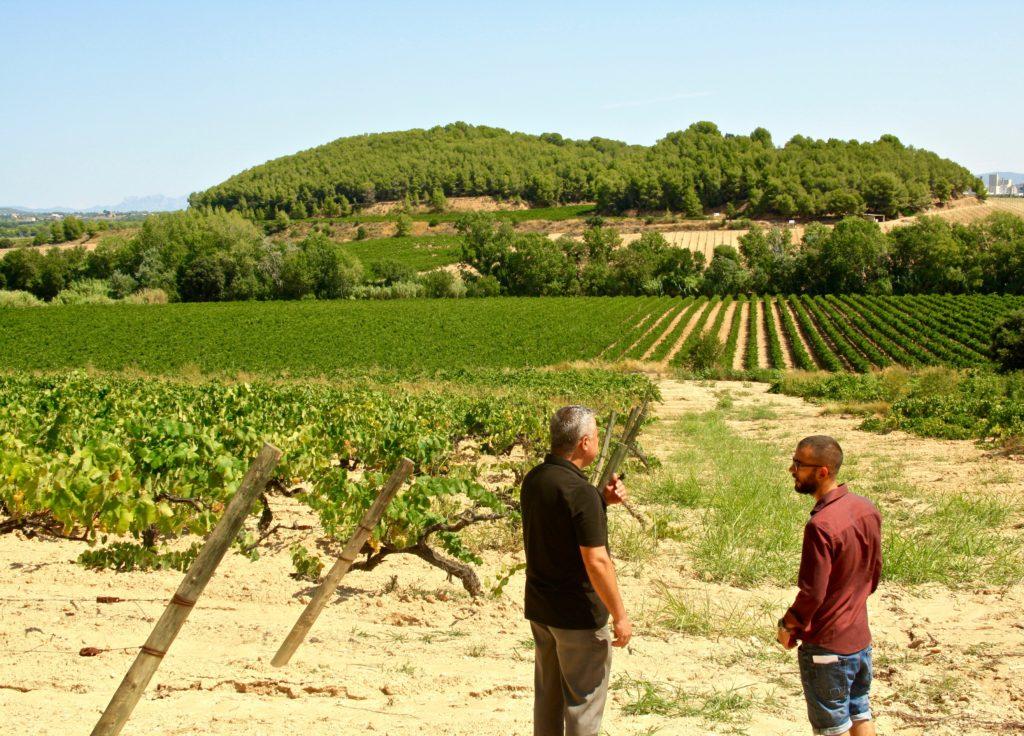 Pinord vi(e) Penedes vin espagnol Luxembourg