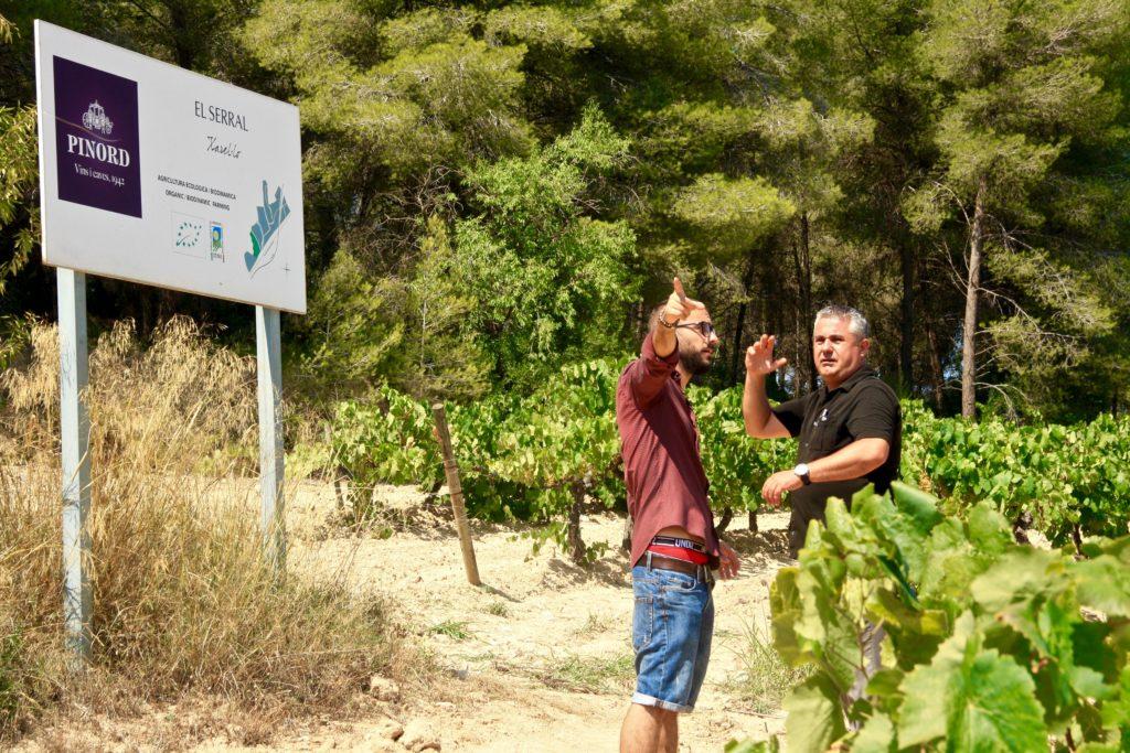 Pinord Penedés vins espagnols Luxembourg vi(e)