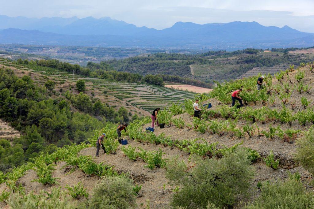 coster de gran clos vin blanc priorat vi(e)