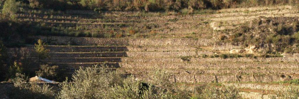 montsant vins espagnols vignobles terrasses