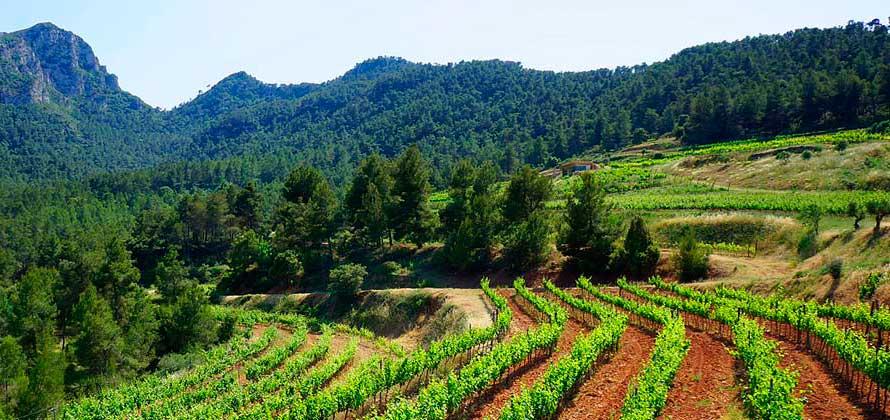 Montsant vignoble domenech