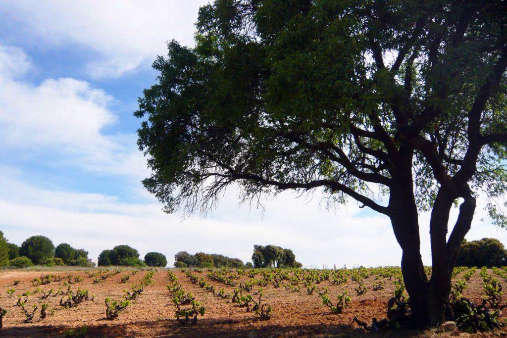 Ribera del Duero vins espagnols Luxembourg